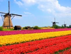 Best VPNs for the Netherlands